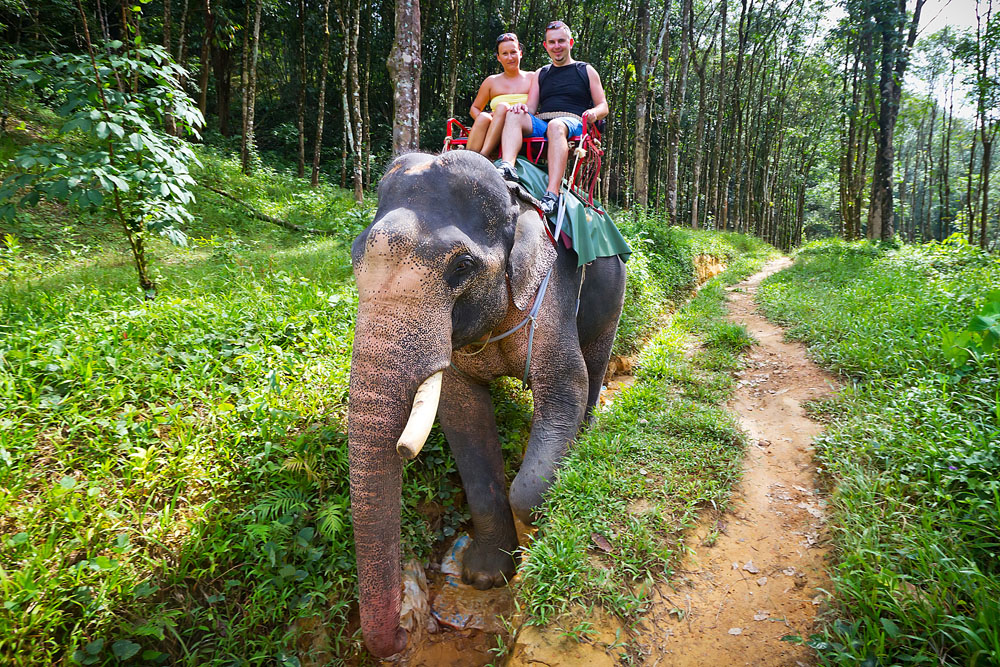 Elephant Trekking in Khao Sok National Park, Thailand