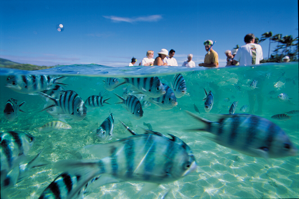 Exotic Marine Life in Fiji