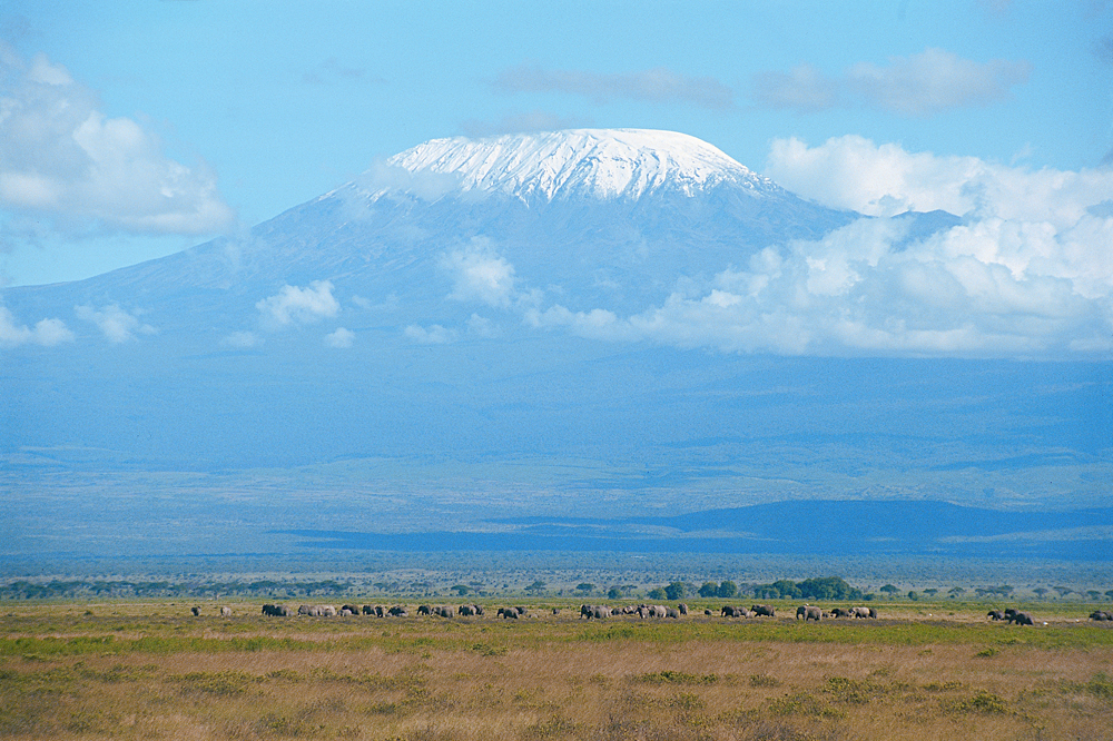 Mount Kilimanjaro in the Background with Ele Herd Up Front, Tanzania