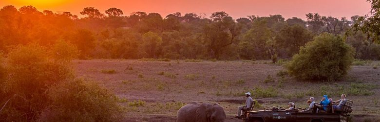 Sabi Sabi Private Game Reserve - Elephants at Sunset Safari