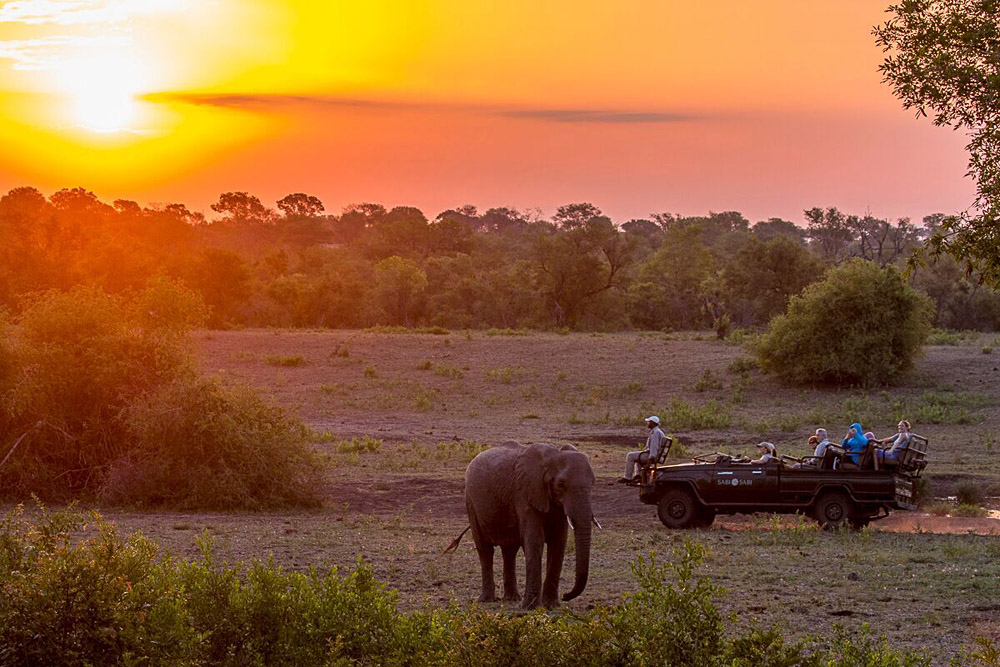 Sabi Sabi Private Game Reserve - Elephants at Sunset Safari