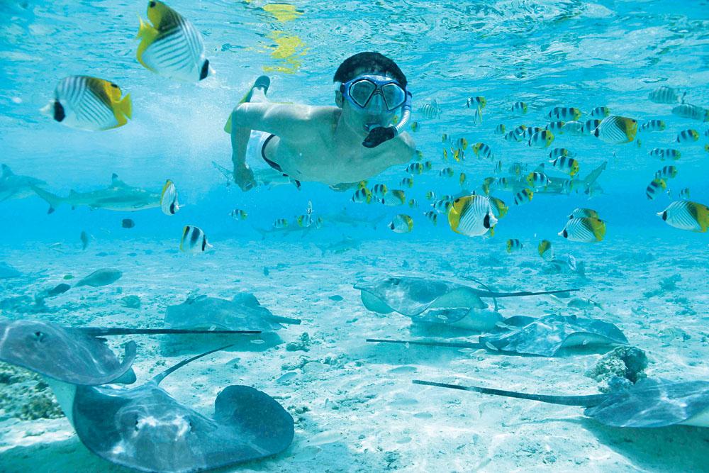 Shark and Stingray Snorkeling Safari, Bora Bora, Tahiti
