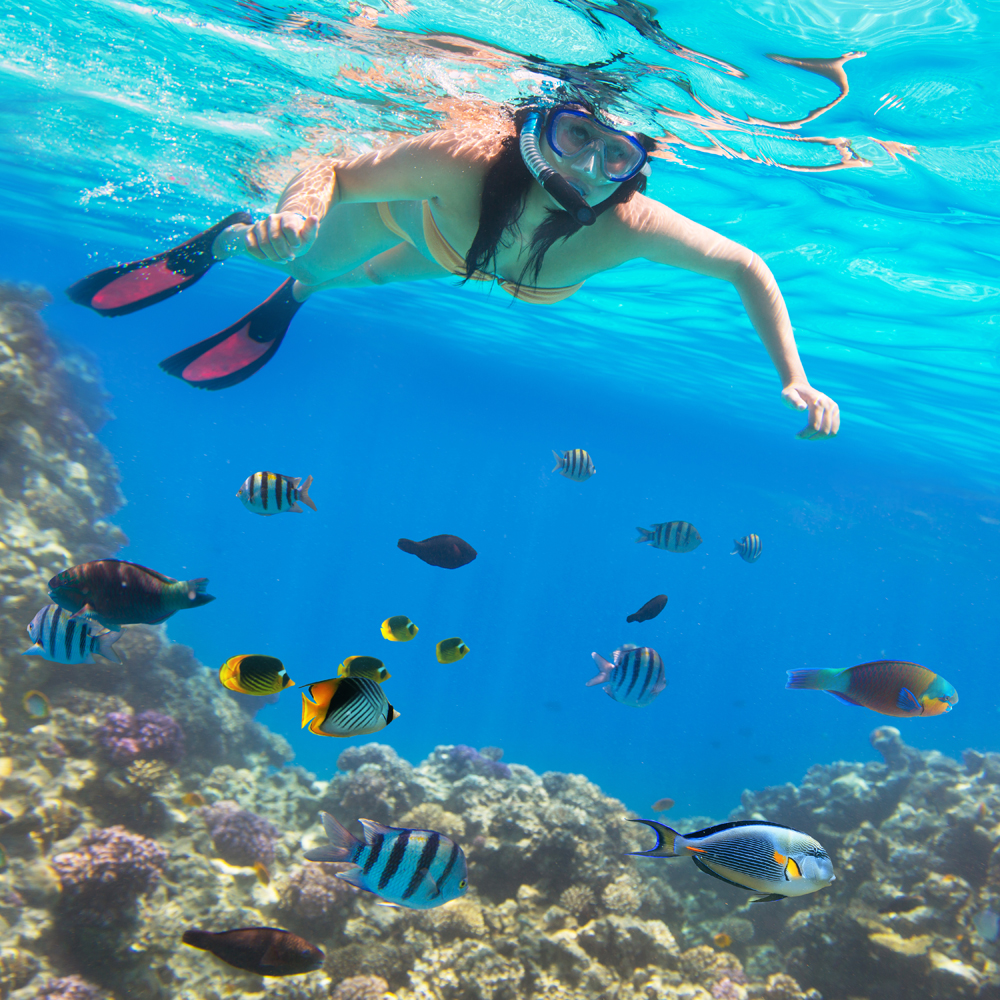 Snorkeling in the Red Sea Reef in Hurghada, Egypt