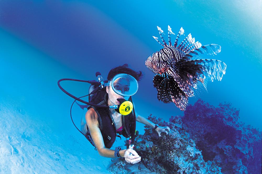 Spotting a Lionfish While Diving in Bora Bora, Tahiti