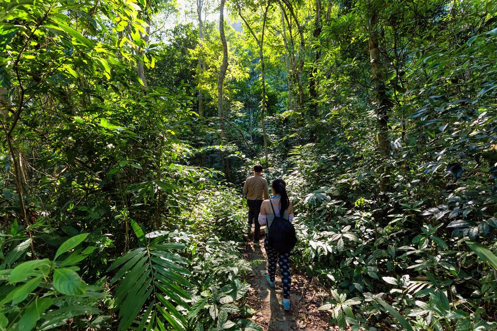 Trekkers Walking in the Dense Jungle of Cat Ba Island, Halong Bay, Vietnam