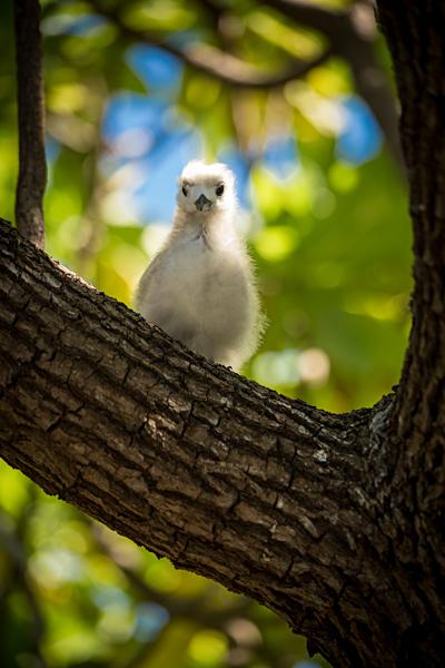 Bronwyn - Bird Island, Tikehau, Tahiti
