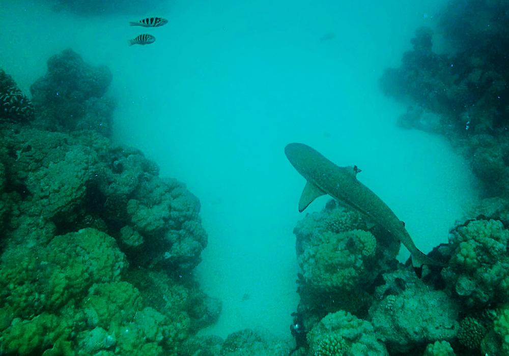 Bronwyn - Snorkeling in Rangiroa, Tahiti