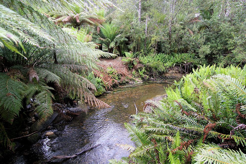 Coming Across a Brook Along the Tahune Air Walk, Tasmania, Australia