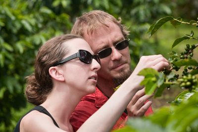 Couple Picking Berries on Coffee Plantation in Costa Rica