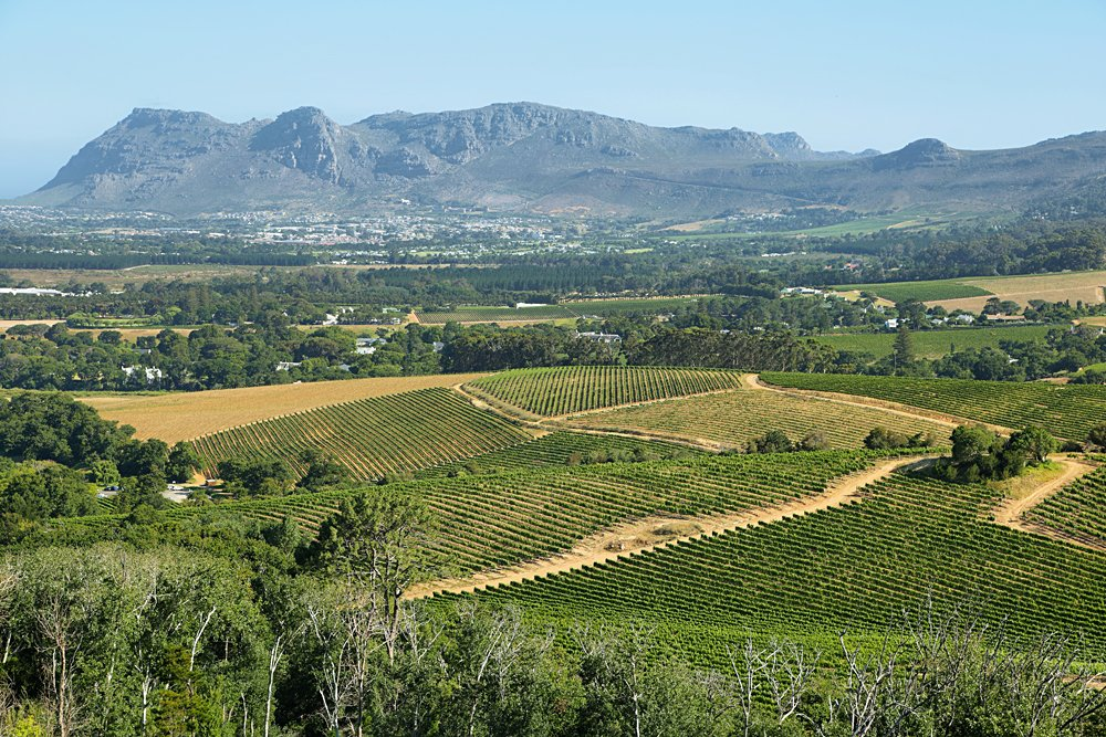 Vineyards Landscape in Constantia Valley, South Africa