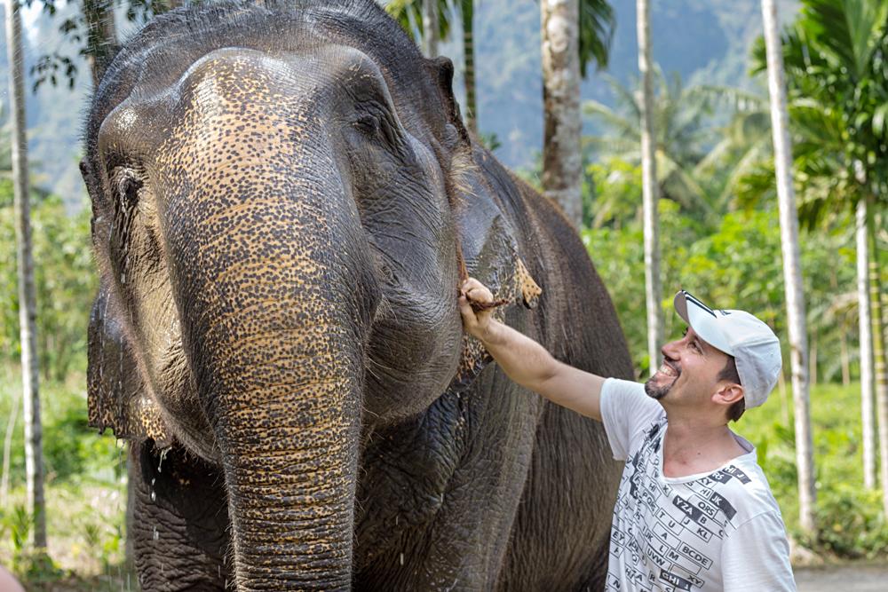 Elephant Hills Experience - Tourist Encounter with an Elephant, Khao Sak, Thailand