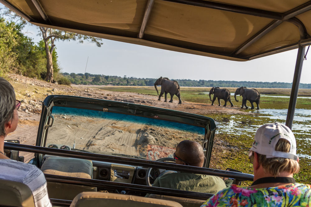 Viewing elephants from within a safari vehicle on an African Safari in Botswana