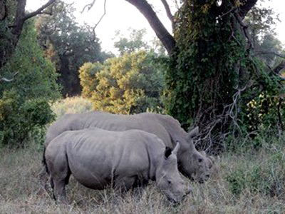 Nicky Cox - Spotting Rhinos in Karongwe Private Game Reserve, South Africa