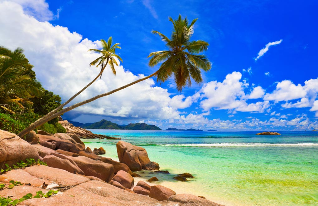 Palms on beach at island La Digue, Seychelles Islands