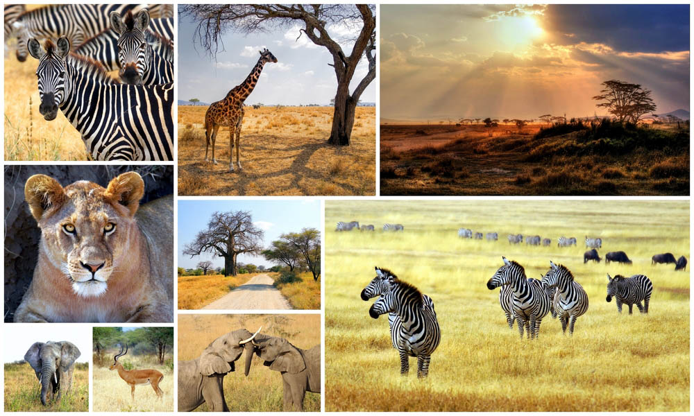 A collection images of different animals taken during an African safari