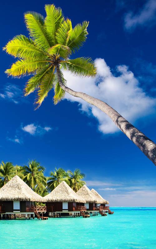 Palm tree on Moorea Island hanging over blue lagoon