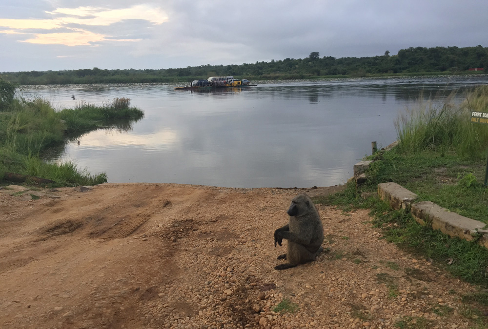 David Zolis - Waiting to board the ferry to cross the Nile near Murchison Falls National Park, Uganda