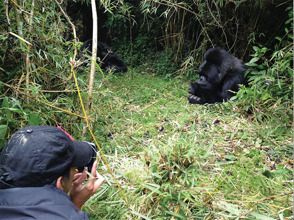 Photographing Gorillas on Gorilla Trekking Tour in Rwanda