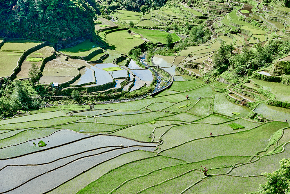 Banaue Rice Terraces, Ifugao, Philippines