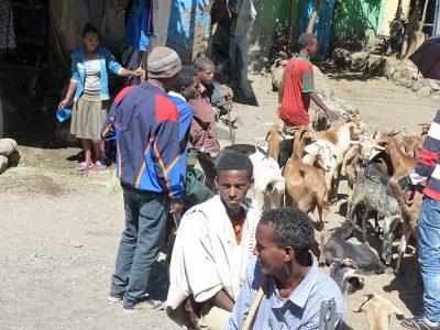 Raewyn Reid - Street Life in Lalibela, Ethiopia
