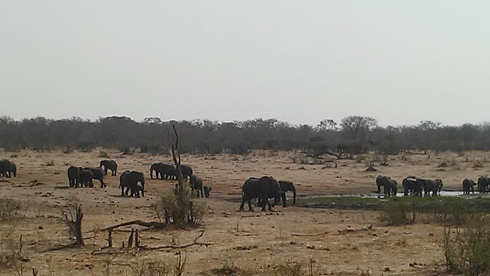 Bijal Kana - Elephants at Hwange National Park, Zimbabwe