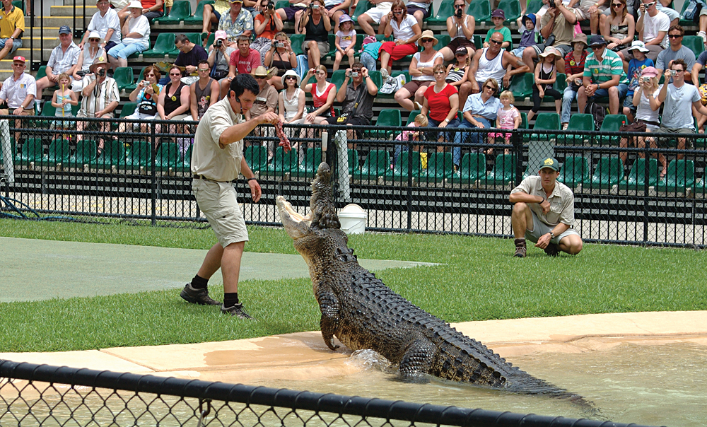 Crocodile Display at Australia Zoo, Queensland, Australia