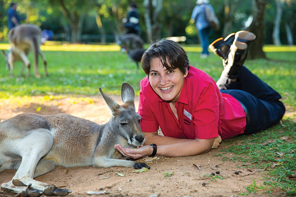Interacting With a Kangaroo at Australia Zoo, Queensland, Australia