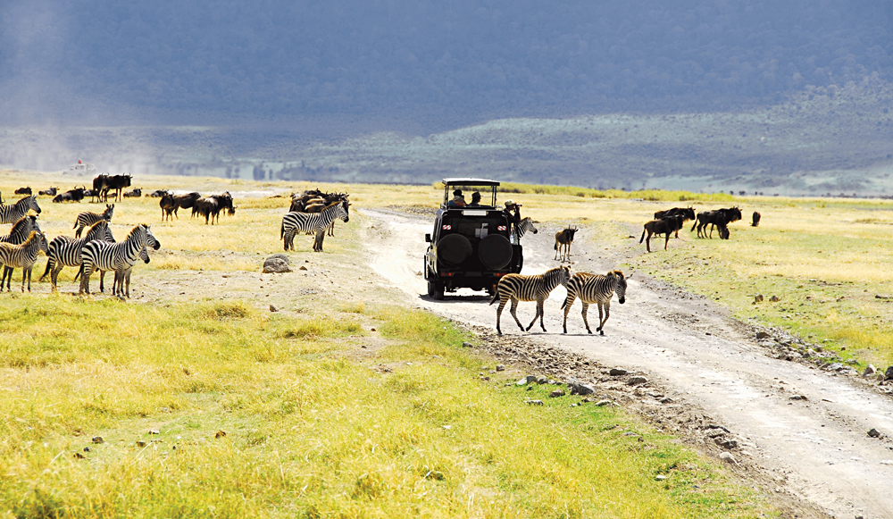 Zebras, Wildebeest and Jeep in Ngorongoro Crater, Tanzania