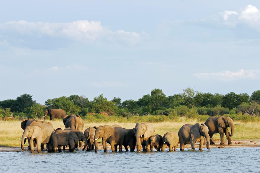 Elephants in Hwange National Park, Zimbabwe