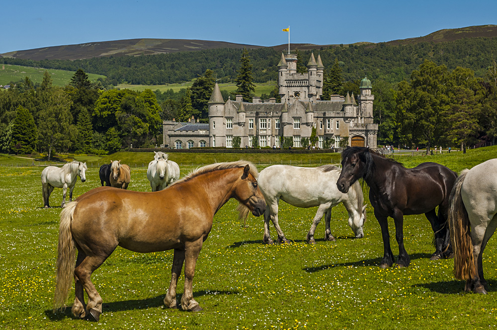 Horses near Balmoral Castle, Scotland, UK