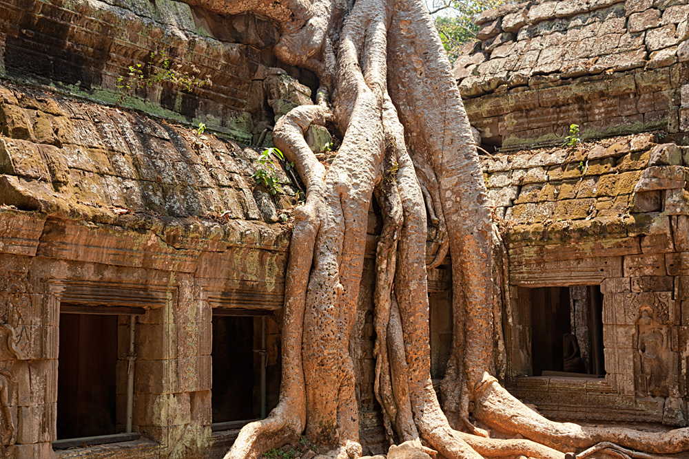 Ta Prohm Temple covered in tree roots, Angkor Wat Complex, Siem Reap, Cambodia.