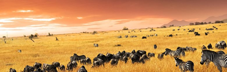 Zebra herd, antelopes and wildebeest at sunset in the savannah, Masai Mara, Kenya