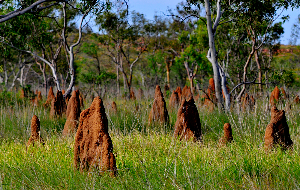 Magnetic Termite Mound in Litchfield National Park, Northern Territory, Australia