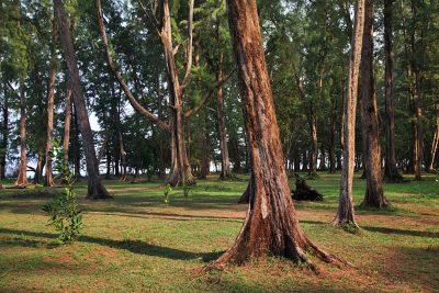 Sirinath National Park in Phuket Province, Thailand