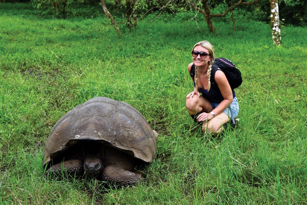 Galapagos Islands Giant Tortoise, Ecuador