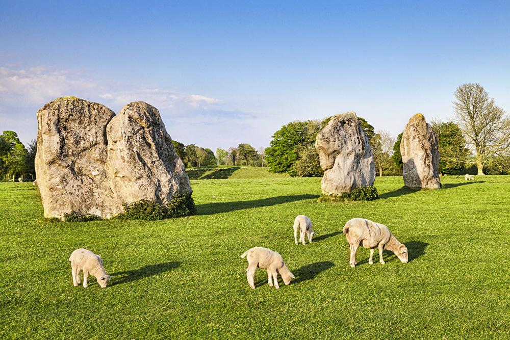 Sheep Grazing at Avebury Great Henge, Wiltshire, England, UK (United Kingdom)