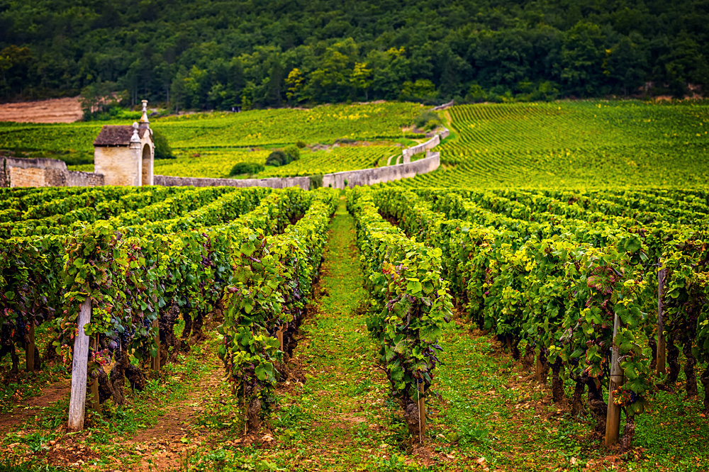 Chateau with vineyards, Burgundy, France