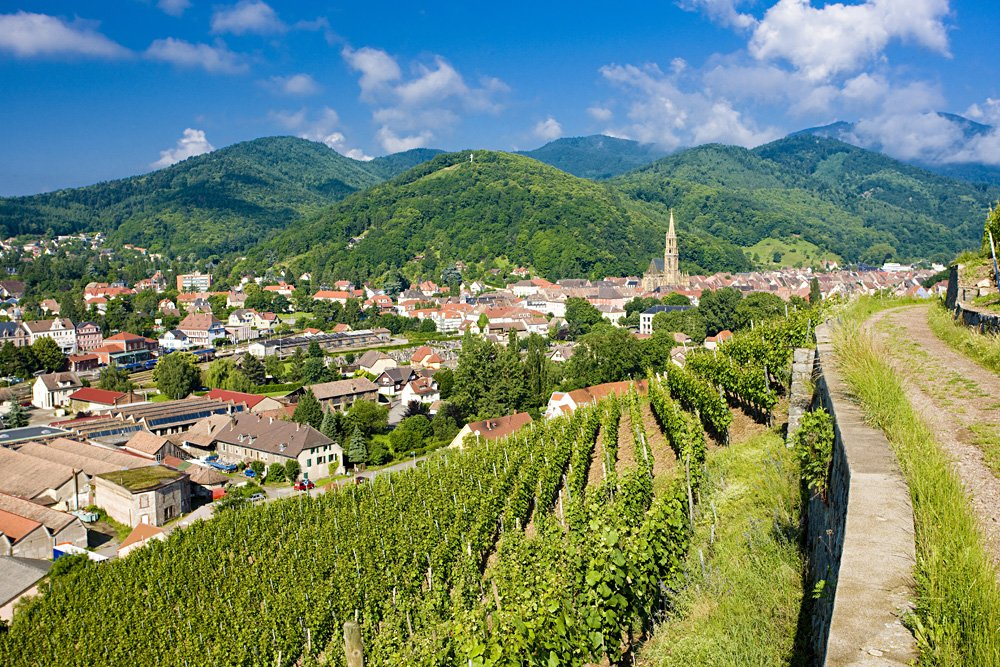 Grand Cru vineyard in Thann, Alsace, France