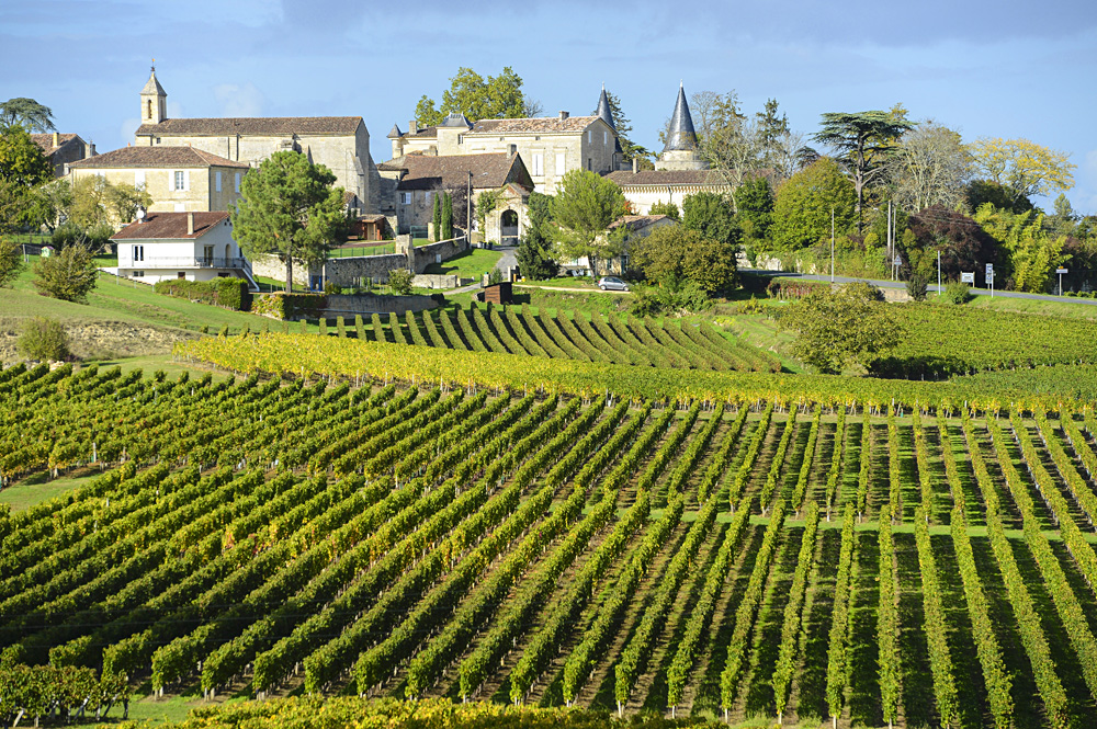Vineyards of Saint Emilion in Bordeaux, France