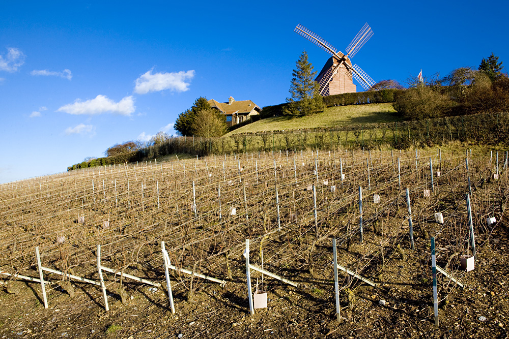 Windmill and vineyard near Verzenay, Champagne Region, France