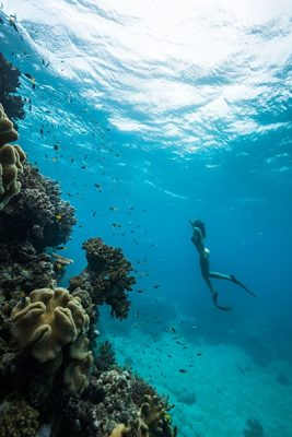 Diving in the Great Barrier Reef, Whitsundays, Queensland, Australia