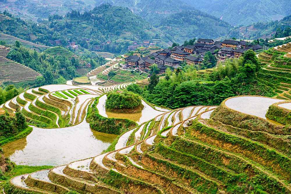 Hillside rice terraces landscape in Yaoshan Mountain, Guilin, China
