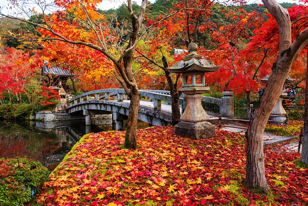 Eikando shrine and bridge with peak autumn foliage, Kyoto, Japan
