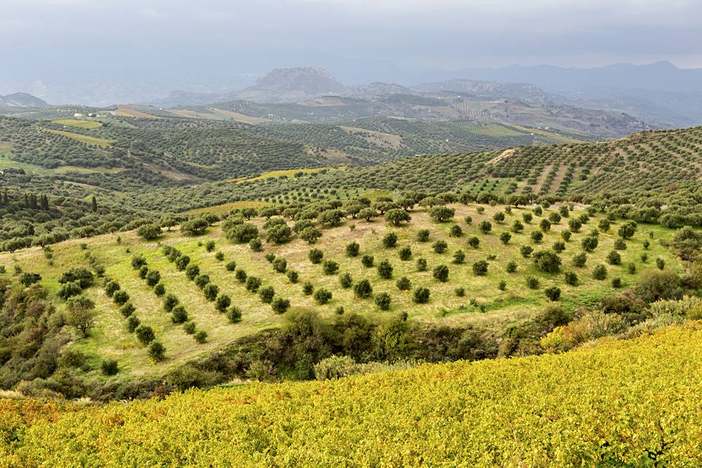 Panoramic views of the mountains and olive groves in the countryside, Crete, Greece