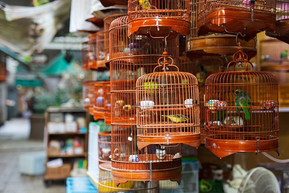 Birds in cages for sale at Birds Market in Kowloon, Hong Kong