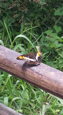 Christian Baines - Iguassu Falls - Butterfly, Brazil Argentina