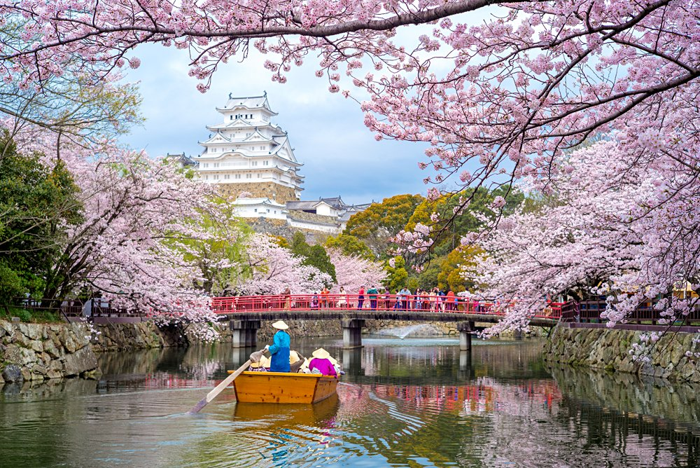 Himeji Castle with beautiful cherry blossom in spring season, Kyoto, Japan