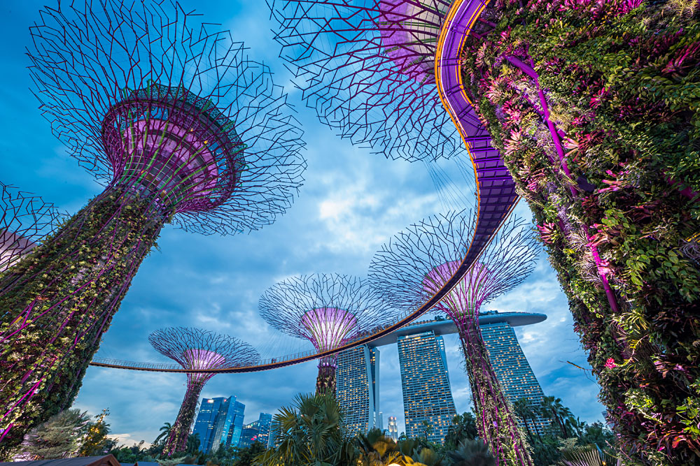 Supertrees at Garden by the Bay, Singapore
