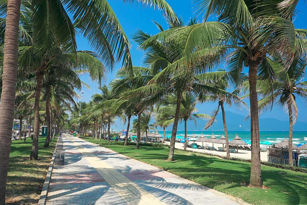 Coconut palm trees line the walkway at China Beach, Danang, Vietnam