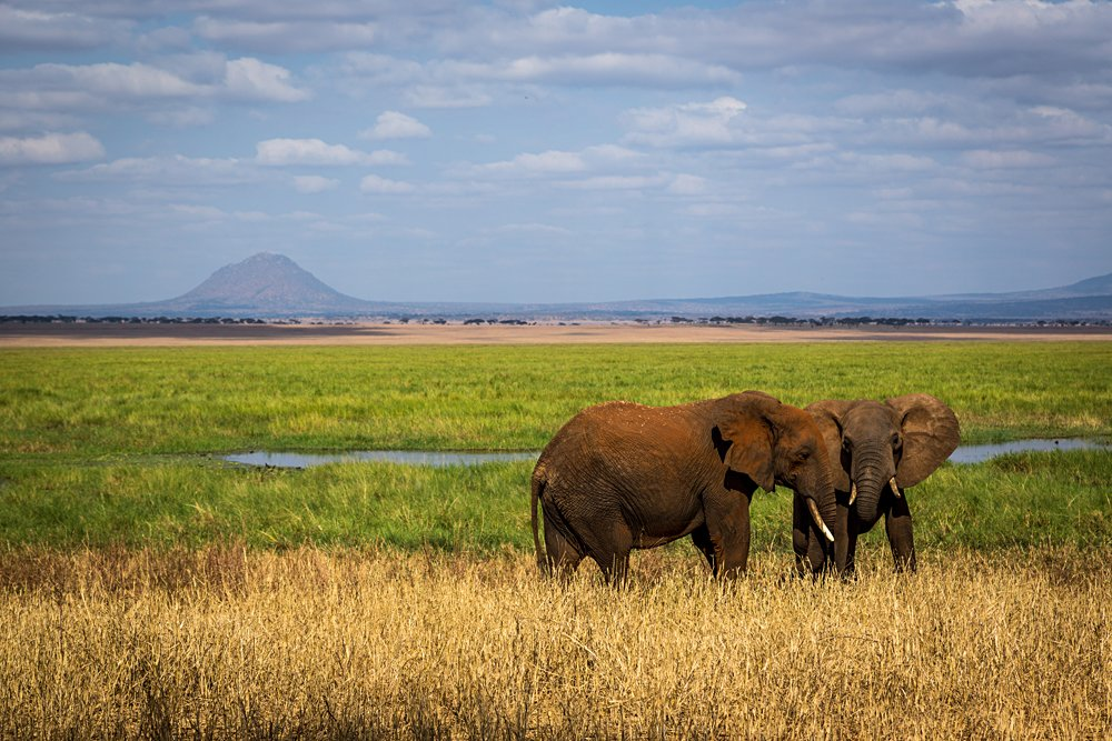 Elephants in Tarangire National Park in north Tanzania